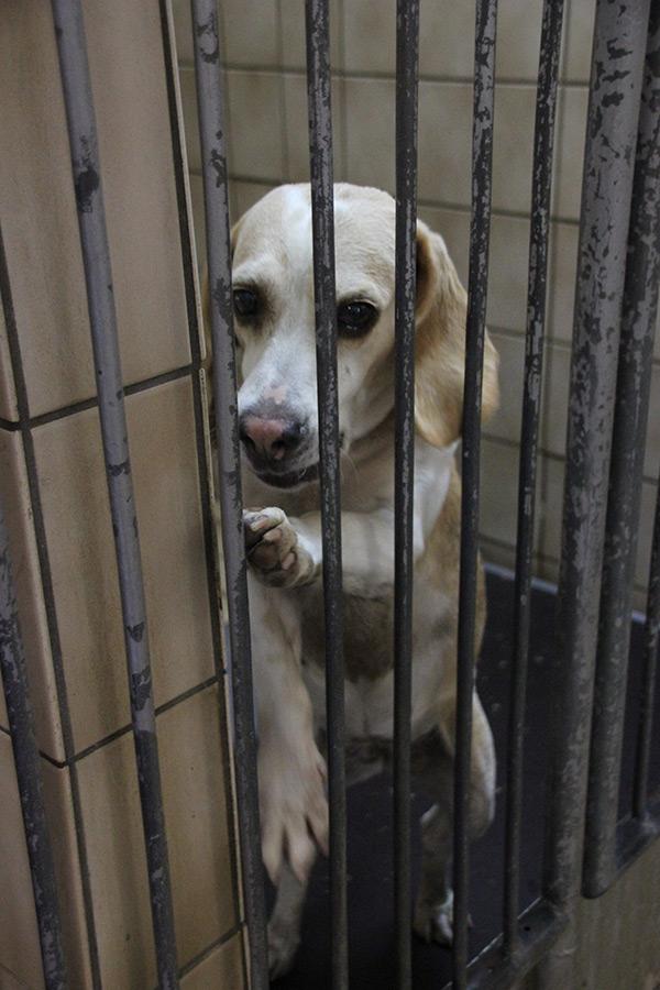 tierheimhund-foto-judith-roderfeld-copyright-tierschutz-shop-5