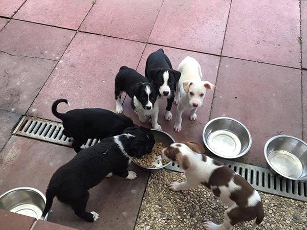 tierheimhunde-fressen-das-gespendete-futter-foto-tierheim-moers-copyright-tierschutz-shop